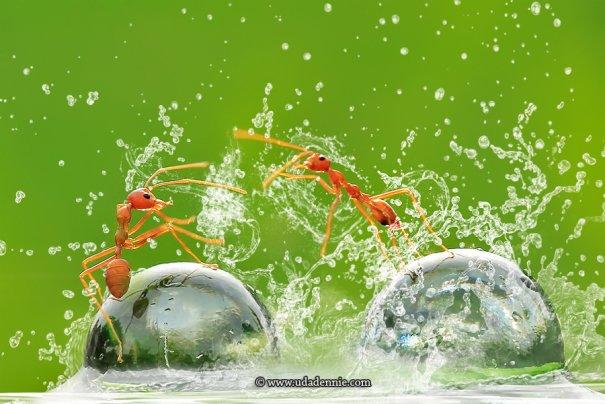 Великолепные фотографии насекомых Дени Алиспутра - №24