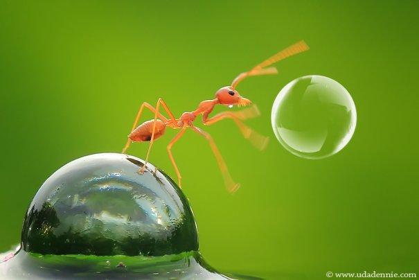 Великолепные фотографии насекомых Дени Алиспутра - №27
