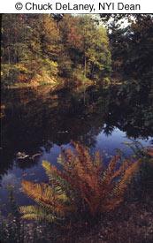 Как фотографировать осенью - №1