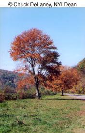 Как фотографировать осенью - №2