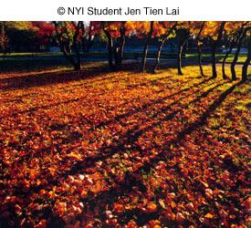 Как фотографировать осенью - №8