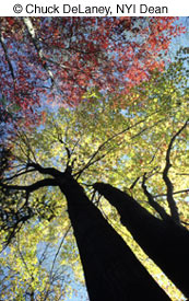 Как фотографировать осенью - №9