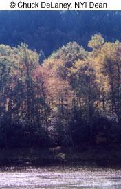 Как фотографировать осенью - №11