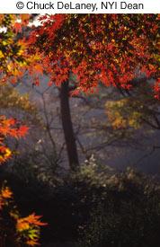 Как фотографировать осенью - №12