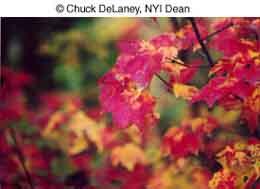 Как фотографировать осенью - №15