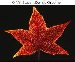 Как фотографировать осенью - №16