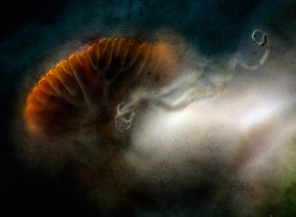 Абстрактные фотографии Урсулы Абреш/Ursula Abresch - №10