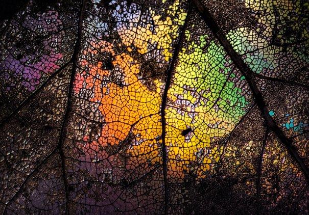 Абстрактные фотографии Урсулы Абреш/Ursula Abresch - №13