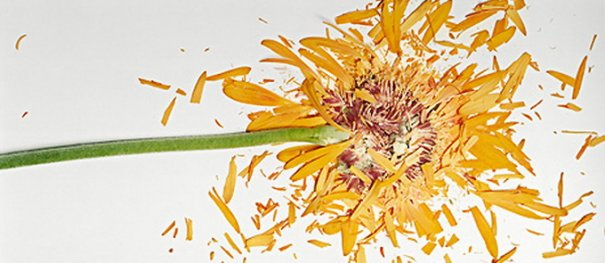 Сломанные цветы Джона Схиремана/Jon Shireman - №1