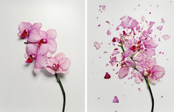 Сломанные цветы Джона Схиремана/Jon Shireman - №3