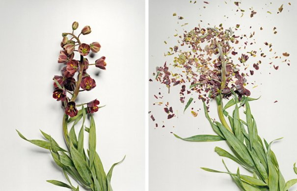 Сломанные цветы Джона Схиремана/Jon Shireman - №5