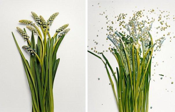 Сломанные цветы Джона Схиремана/Jon Shireman - №6
