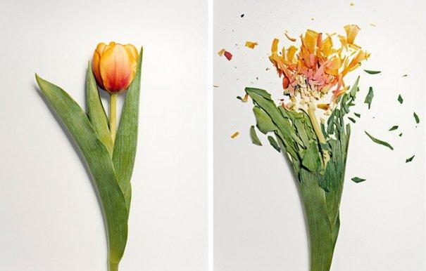 Сломанные цветы Джона Схиремана/Jon Shireman - №7