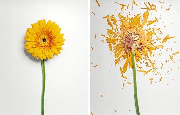 Сломанные цветы Джона Схиремана/Jon Shireman - №8