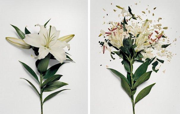 Сломанные цветы Джона Схиремана/Jon Shireman - №9