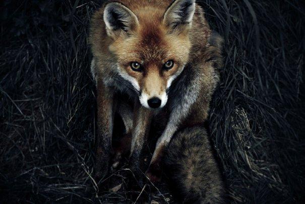 © Sam Morris/National Geographic Photo Contest