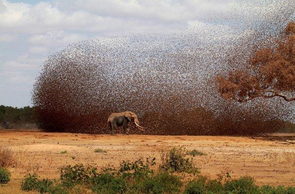 © Antero Topp/National Geographic