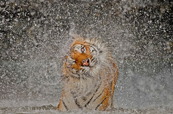 © Ashley Vincent/National Geographic Photo Contest