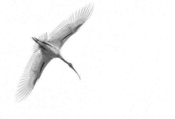 © Sushrutha Metikurke/National Geographic Photo Contest