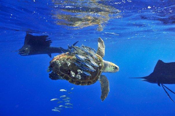 © Scott Belt/National Geographic Photo Contest