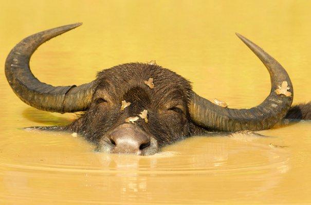 © Ondrej Zaruba/National Geographic Photo Contest