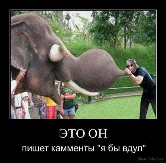 смешные фотографии, фото приколы