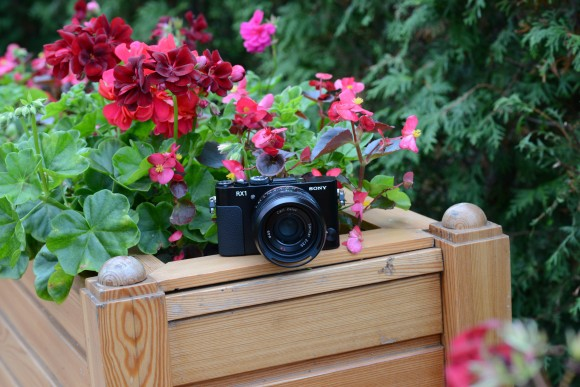 Nikon D600, ISO 800, 85 мм, f/7.1, 1/80 c