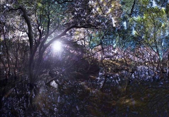 2008 манговое дерево