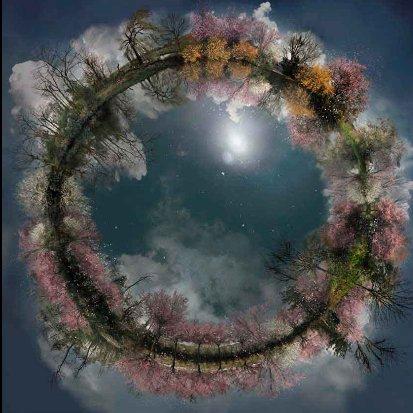 2011 американская ночь - весенние цветы