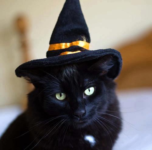 Хэллоуин - №10