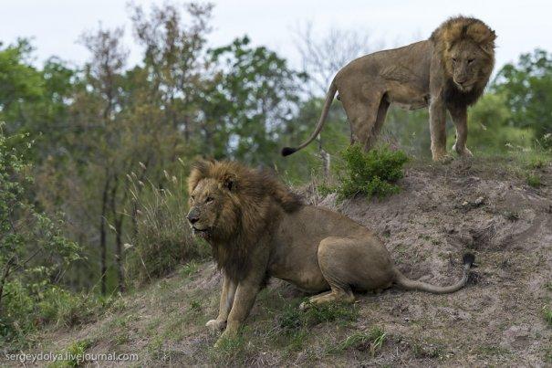 Интересный репортаж из мира животных