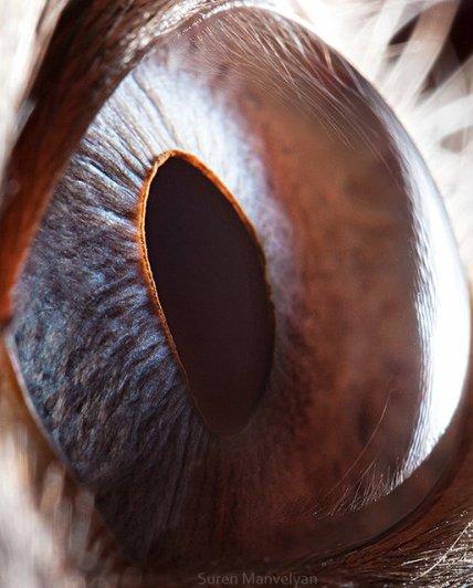 Глаза животных от Сюрен Манелян/Suren Manvelyan - №4