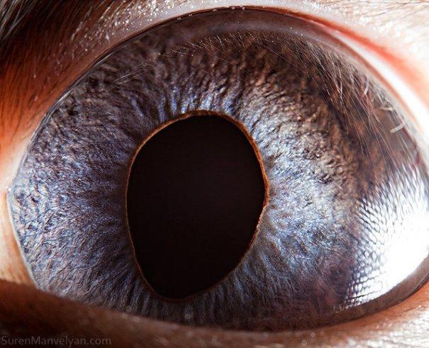 Глаза животных от Сюрен Манелян/Suren Manvelyan - №5