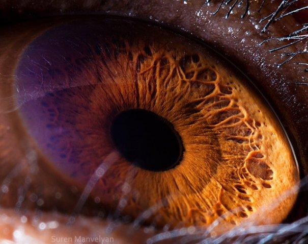 Глаза животных от Сюрен Манелян/Suren Manvelyan - №6