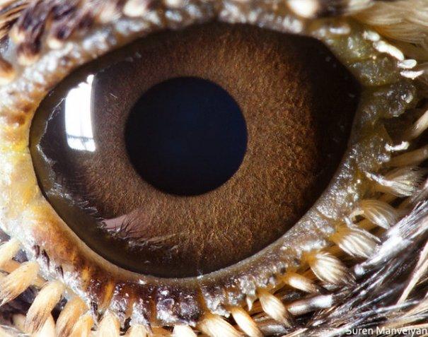 Глаза животных от Сюрен Манелян/Suren Manvelyan - №8