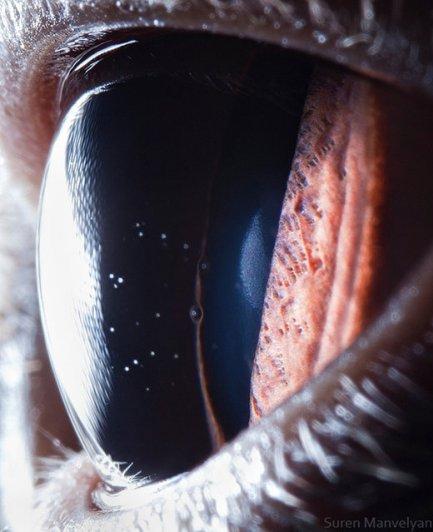 Глаза животных от Сюрен Манелян/Suren Manvelyan - №9