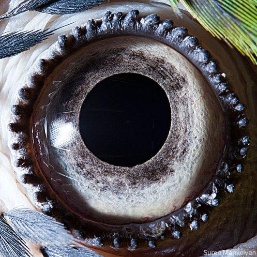 Глаза животных от Сюрен Манелян/Suren Manvelyan - №10