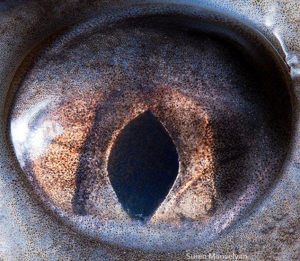 Глаза животных от Сюрен Манелян/Suren Manvelyan - №14