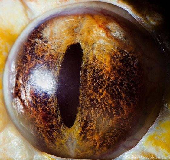 Глаза животных от Сюрен Манелян/Suren Manvelyan - №15