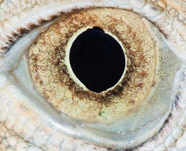 Глаза животных от Сюрен Манелян/Suren Manvelyan - №16