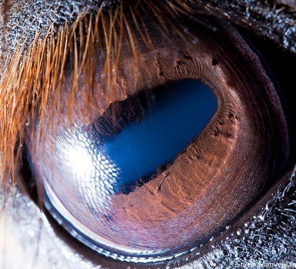 Глаза животных от Сюрен Манелян/Suren Manvelyan - №18