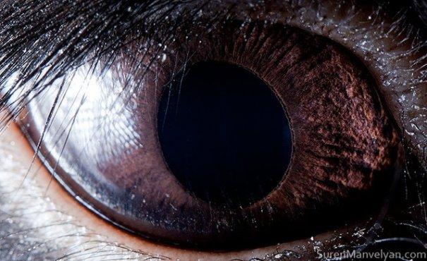 Глаза животных от Сюрен Манелян/Suren Manvelyan - №19