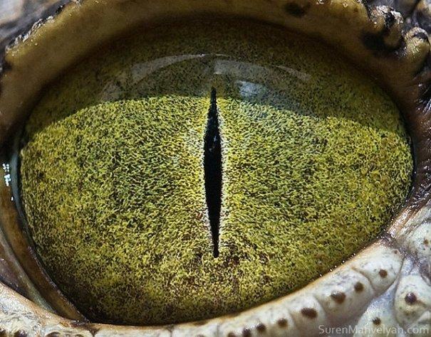 Глаза животных от Сюрен Манелян/Suren Manvelyan - №20