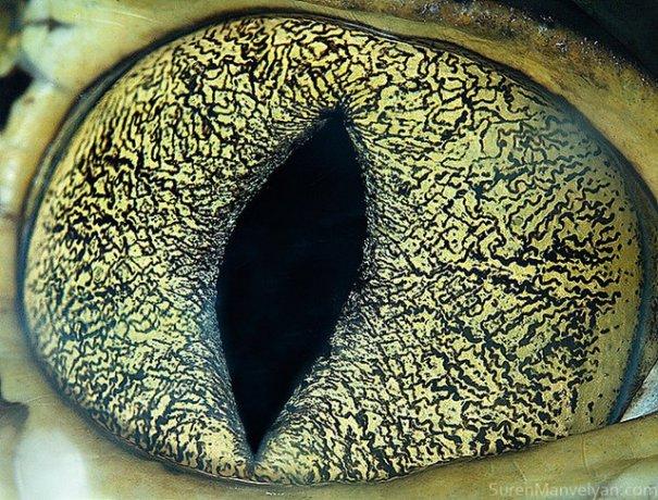 Глаза животных от Сюрен Манелян/Suren Manvelyan - №21
