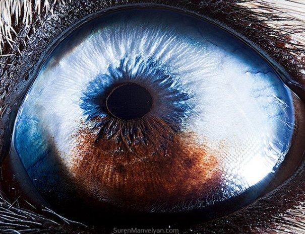 Глаза животных от Сюрен Манелян/Suren Manvelyan - №22