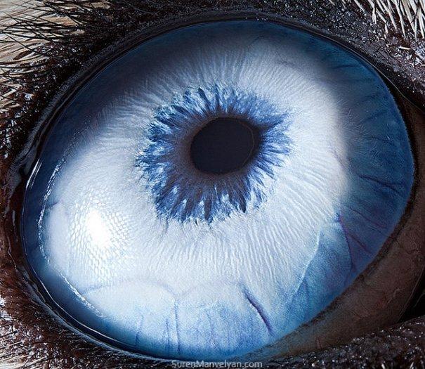 Глаза животных от Сюрен Манелян/Suren Manvelyan - №23
