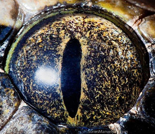 Глаза животных от Сюрен Манелян/Suren Manvelyan - №24