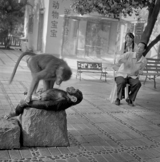 Мастер черно-белой фотографии Ян Минг/Yan Ming - №11