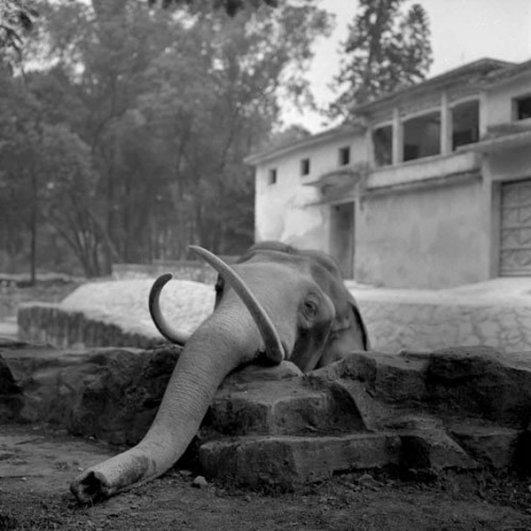 Мастер черно-белой фотографии Ян Минг/Yan Ming - №15