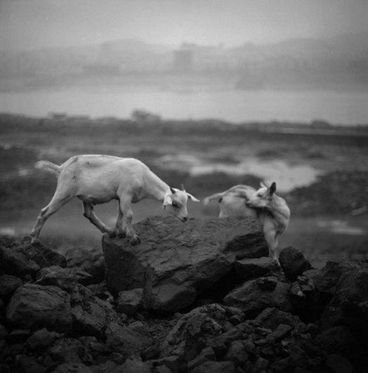 Мастер черно-белой фотографии Ян Минг/Yan Ming - №20